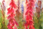 13-071 - Foxgloves - £113 -  Watercolour on W/C Paper -  White mount 50x40cm