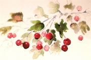 13-089 - Hawthorn - Watercolour on  Paper - £25.00 - 25x20cm - Mounted