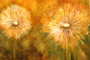 13-090 - Dandelion Fall -  £38 - Watercolour on W/C Paper - Mounted 25x20cm