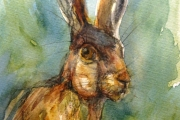 14-016 - Hare Aware - SOLD