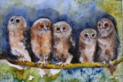 14-033 - Tawny Owl Babies - SOLD