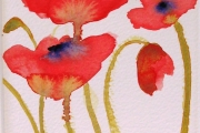 160-005 Poppies £37.50 Watercolour on W/C Paper Mounted 25x20cm